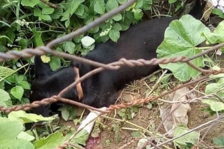 Bahçesine giren köpeği sopayla öldürdü