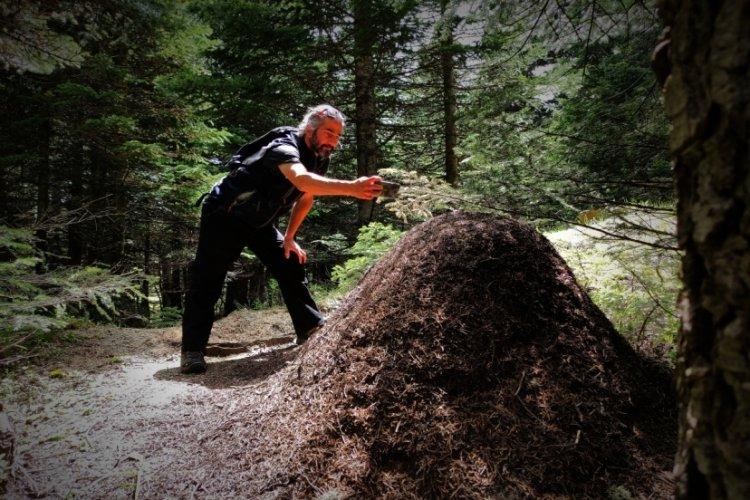 Bursa Uludağ'da dev karınca yuvaları görenleri hayretler içinde bırakıyor