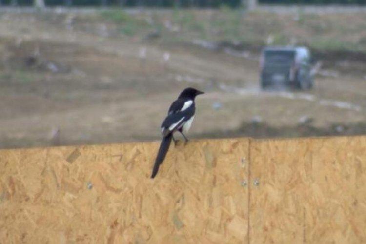 Batı Nil virüsü endişesi! Ölü kuşlara dokunanlar dikkat