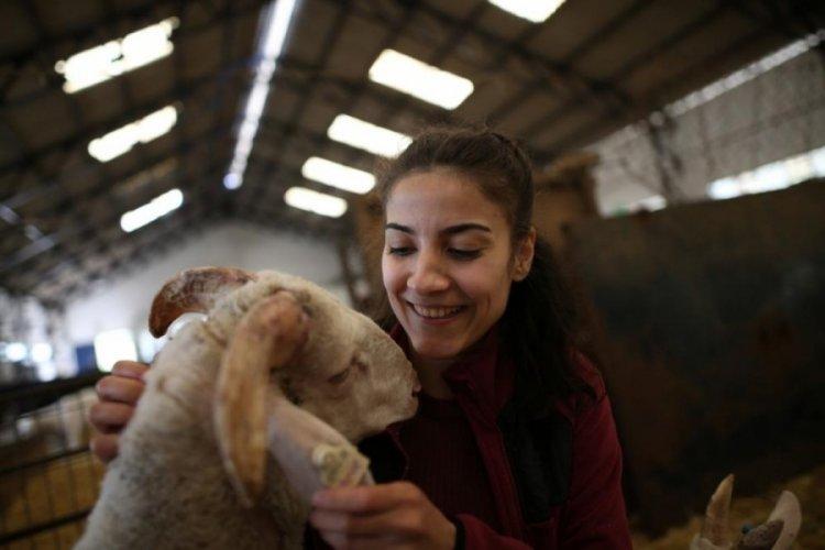 """Bursa'da """"Araf"""" ismini verdiği koyun, çocuğu gibi peşinden ayrılmıyor"""