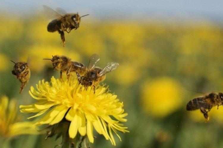 Çevre kirliliği arıları da tehdit ediyor!