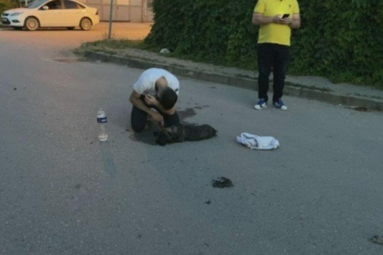 Bursa'da aracın çarpması sonucu yaralanan köpeğinin başında gözyaşı döktü