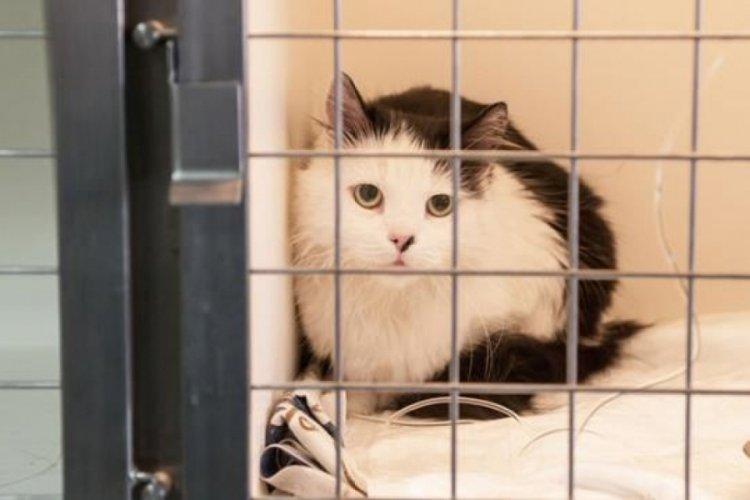 Hayvan Hakları Yasası'nda son düzenlemeler yapıldı