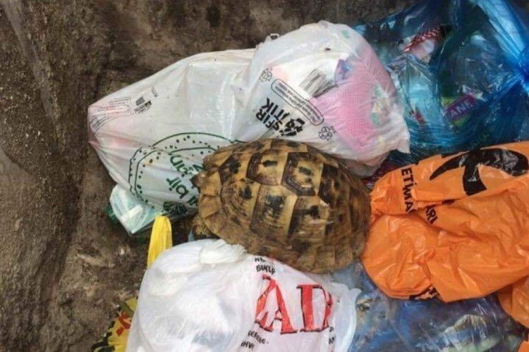 Temizlik görevlileri, çöpe atılmış kaplumbağa buldu