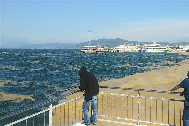 Bursa Mudanya'da müsilaj temizleme çalışmaları devam ediyor