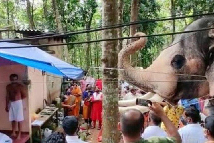 Hindistan'da bir fil, ölen bakıcısını son kez görmek için kilometrelerce yürüdü