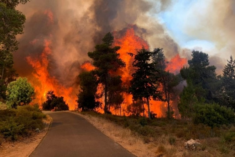 Kudüs'te korkutan yangın! 2 bin 650 dönüm arazi küle döndü