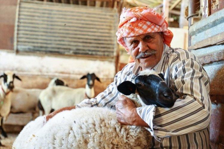 Ekrem Çelik, 77 yıldır Sakız koyunu yetiştiriyor