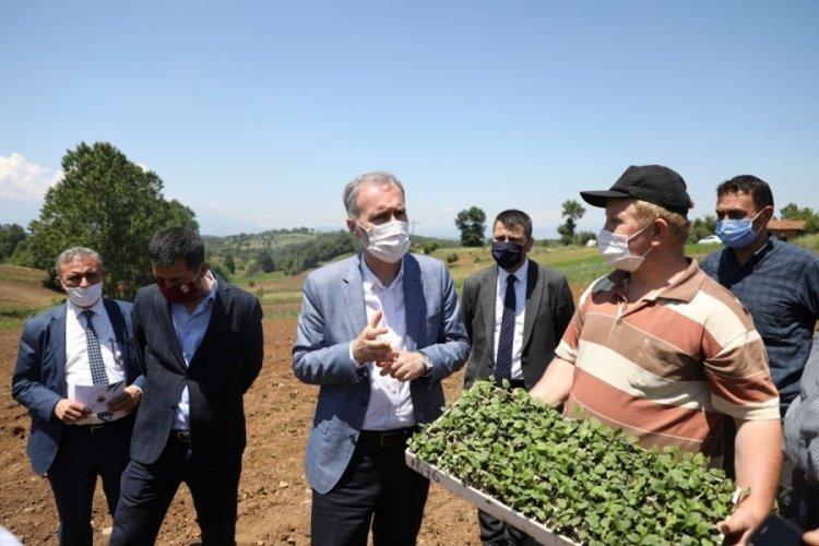 Bursa İnegöl'de ilk ekinezya ekimi gerçekleşti