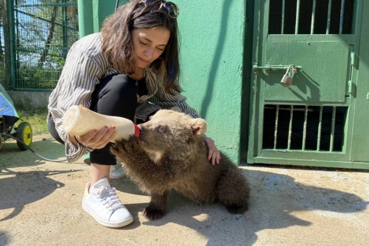 Oyuncu Aslıhan Gürbüz Bursa'da ayıyı biberonla besledi