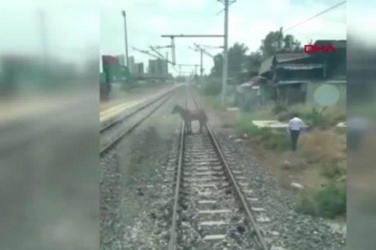 Makinist treni durdurup, rayların üzerindeki atı kurtarmayı başardı