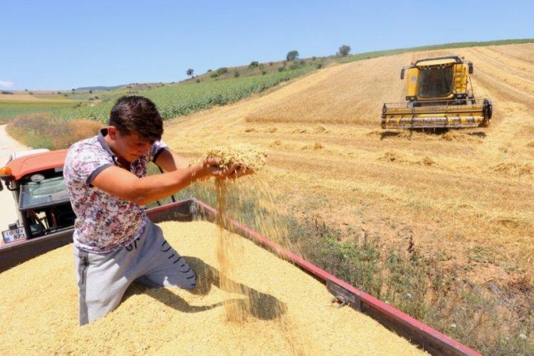 Bursa'da çiftçi umudunu buğdaya bağladı