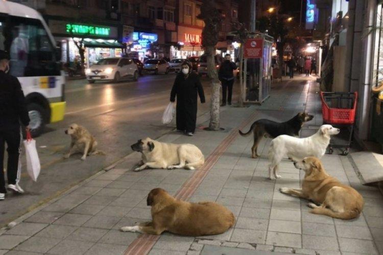 Bursa Gemlik'te köpek ve kedi ısırmaları arttı