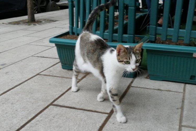 Kedi yediğini itiraf eden Japon, sınır dışı edilecek