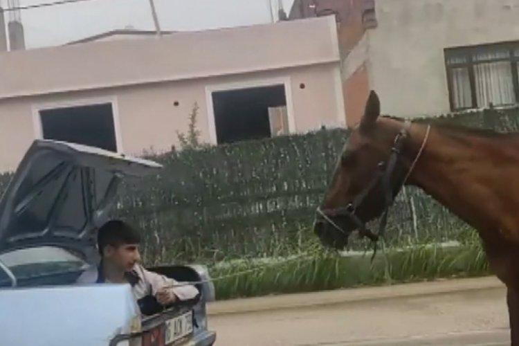 Bursa'da atı koşturan araç sahibine ceza!