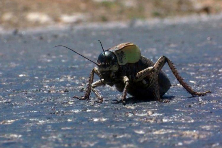 'Böcek' alarmı: İklim değişimi yeraltını da etkiliyor