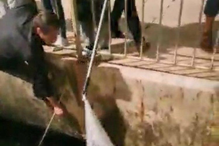 Bursa'da denize düşen kedi balıkçı kepçesiyle kurtarıldı