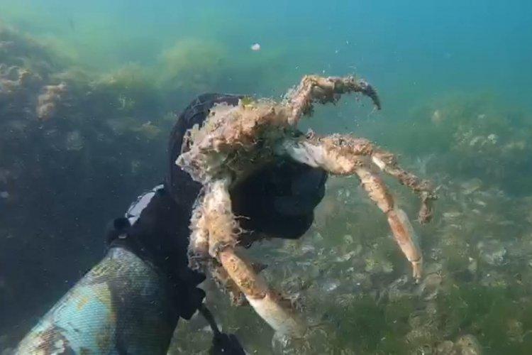 Müsilajın, deniz altındaki tahribatını görüntülediler