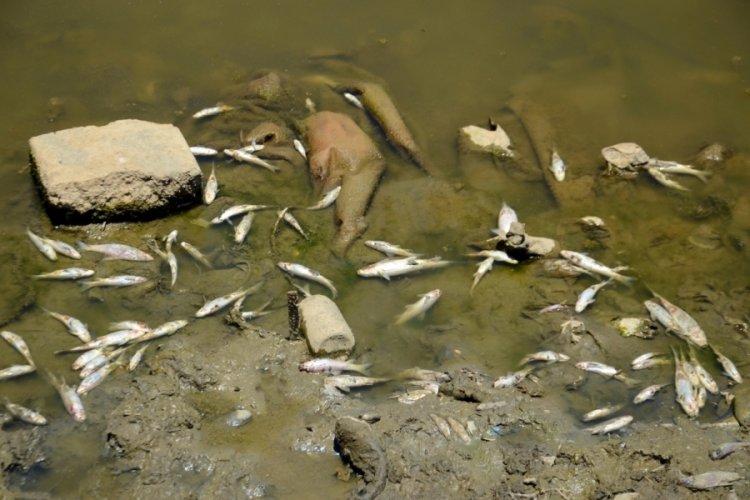Karasu Nehri'nde balık ölümleri