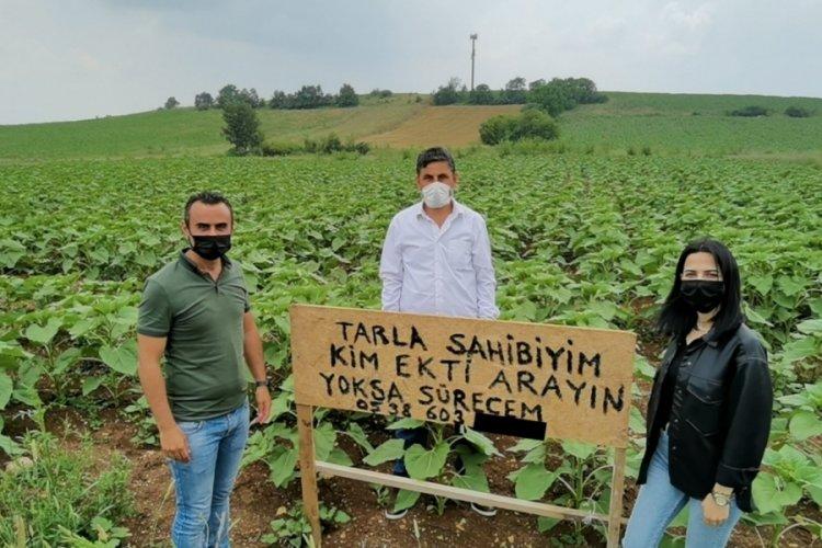 Bursa'da izinsiz ekim yapan kişiyi tarlasına diktiği tabelayla arıyor