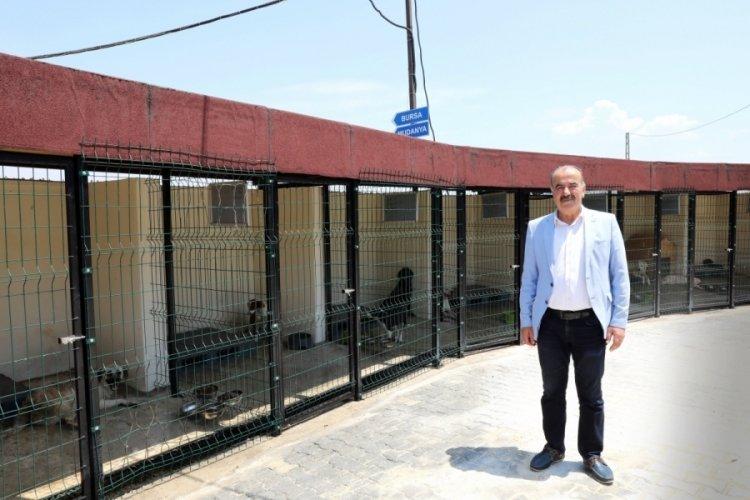 Bursa Mudanya'da hayvan bakım evinde iyileştirme