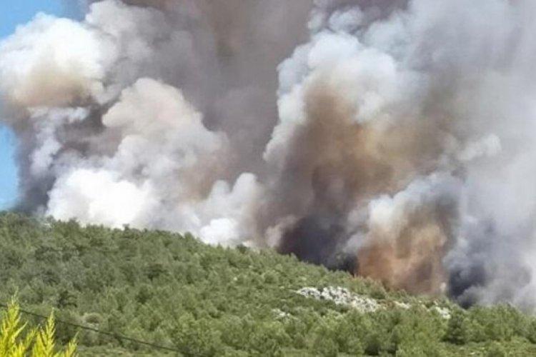 Kaş'ta orman yangını! Havadan ve karadan müdahale ediyor