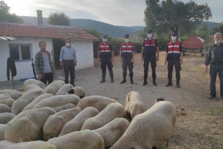 Kaçan koyunları jandarma buldu