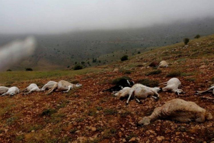 Yıldırım düşmesi sonucu 16 koyun ve 4 inek öldü