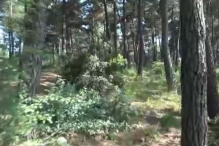 Kaybolan gencin cesedi ormanda ağaca asıl halde bulundu