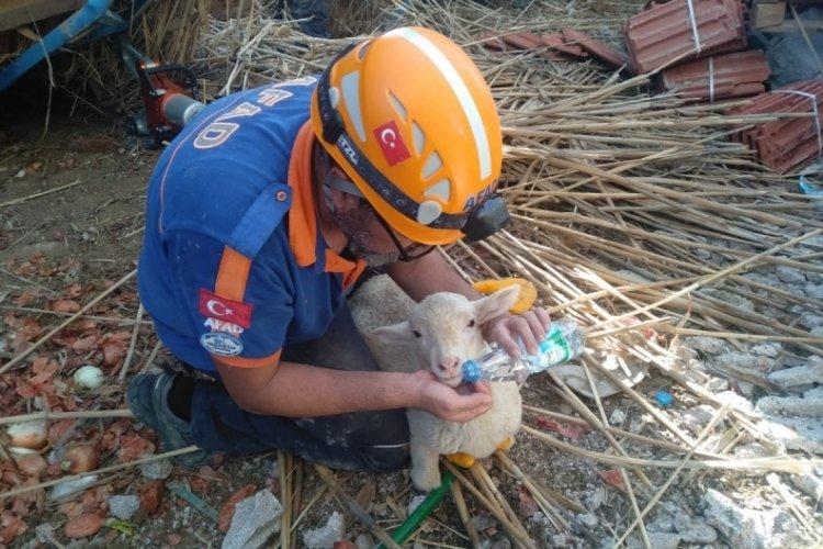 İnşaat çöktü: 150 koyun ve kuzu göçük altında kaldı