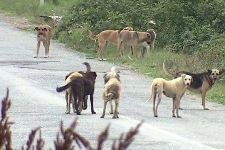 Köpek ısırmasında valilik ve belediye sorumlu tutuldu