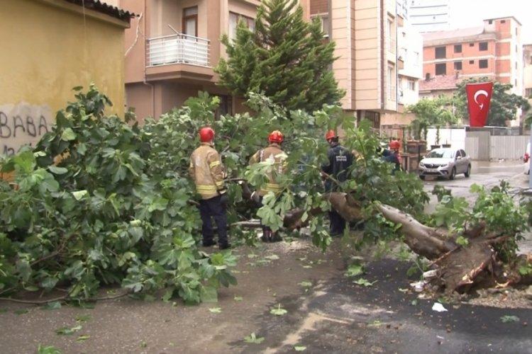 Etkili yağış nedeniyle ağaç devrildi!