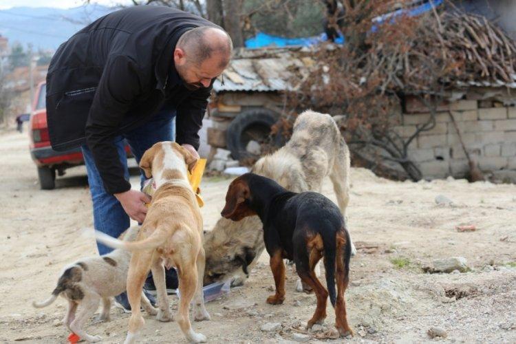 Bursa Orhaneli Belediyesi'nden sokak hayvanları için çağrı