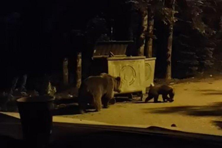 Bursa'da yiyecek arayan ayılar yerleşime indi