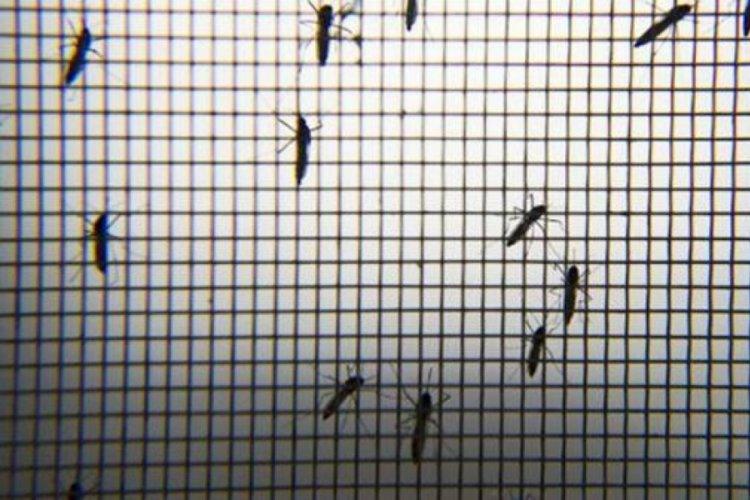 Hindistan'da şimdi de 14 kişide Zika virüsü görüldü
