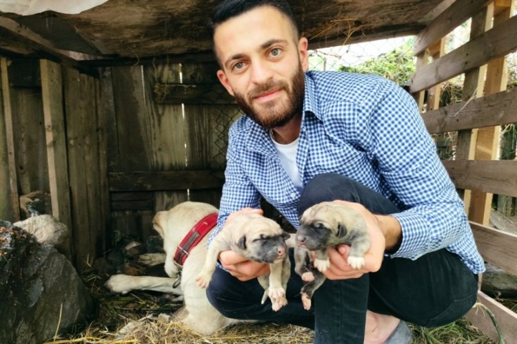 Bursa'da köpeği tek seferde 'servet' doğurdu