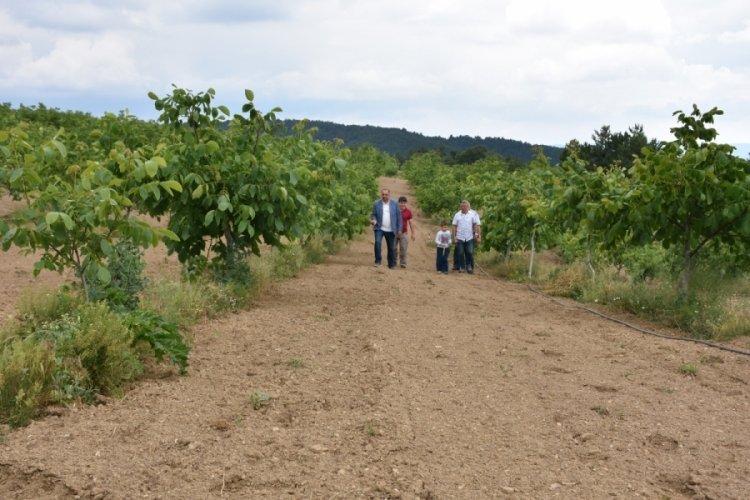 1200 rakımlı yaylada ceviz bahçesi kuran Bursalı firma bölge ekonomisine katkı sağlıyor
