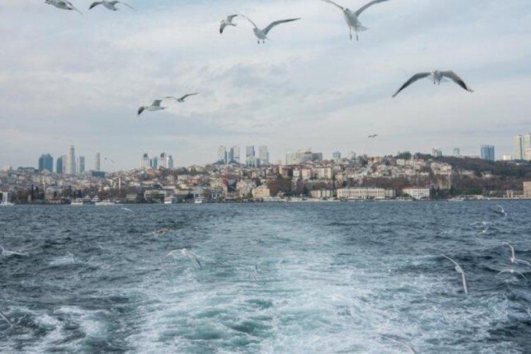 Marmara'da balıklar görünmeye başladı
