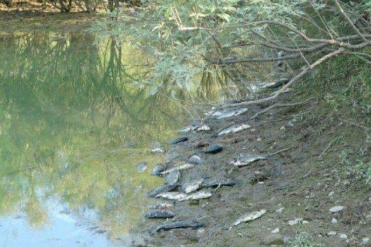 Manavgat'ta balık ölümleri