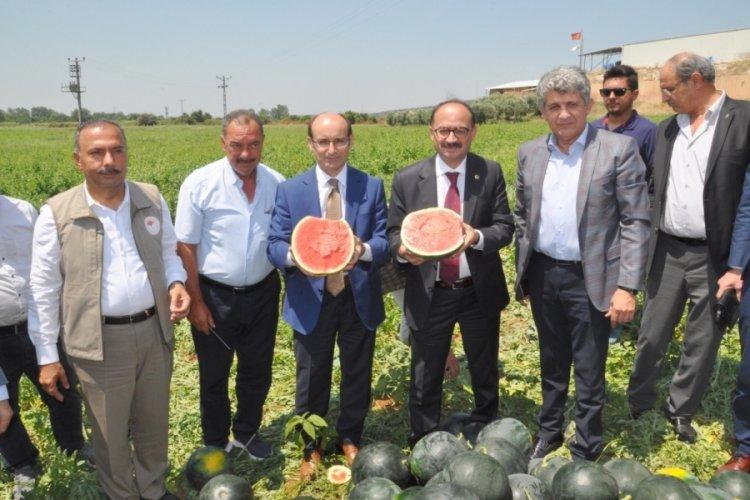 Bursa Karacabey'de Karpuz Hasat Şenliği yapıldı