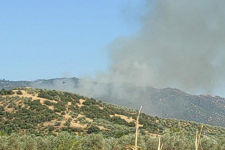 Aydın'da tarım arazisinde yangın