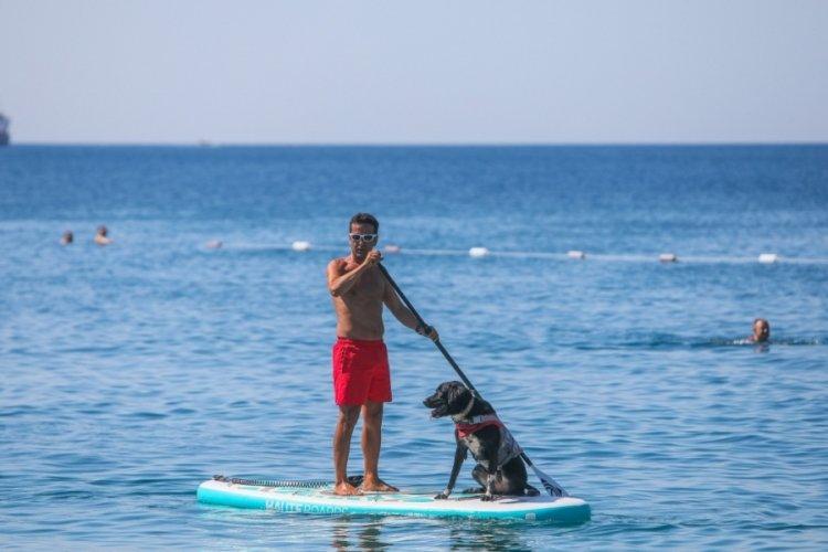 Antalya'da köpeğine cankurtaran eğitimi veriyor