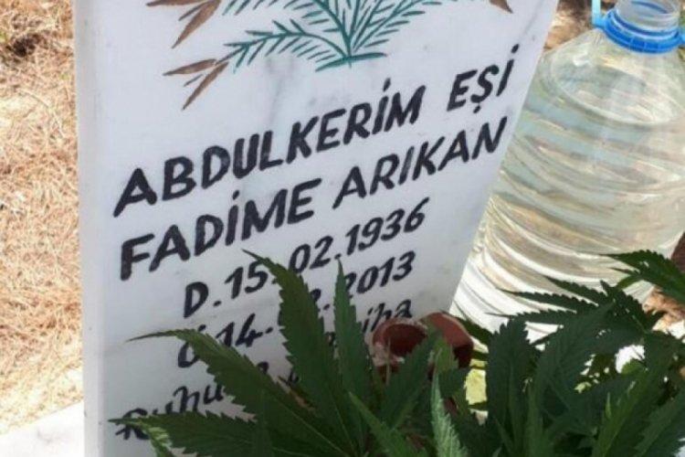 Afyonkarahisar'da akralarının mezarına kenevir ekti!