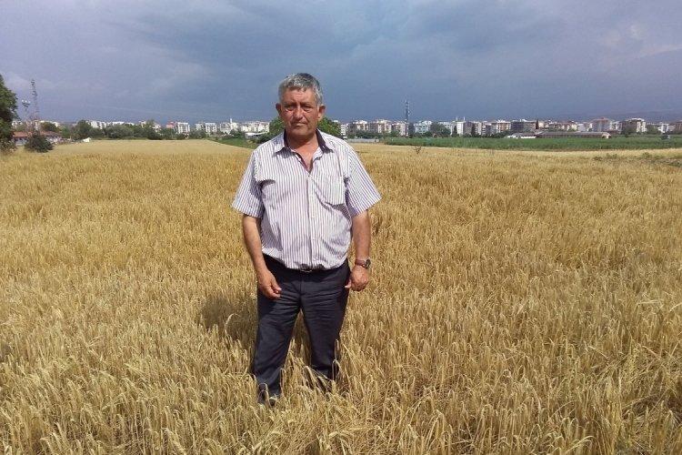 Bursa Yenişehir ovasında hasat zamanı
