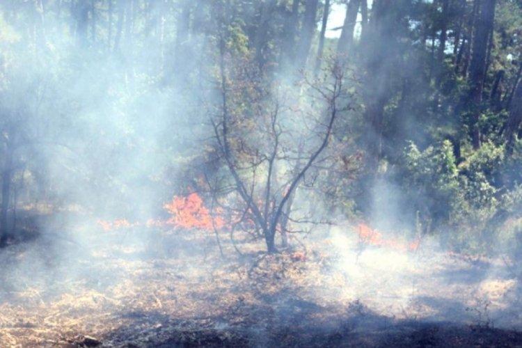 Tekirdağ'daki orman yangınında sabotaj şüphesi