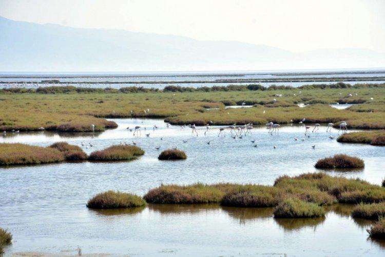 Gediz Deltasında flamingoların da olduğu bazı kuş türleri ölü bulundu