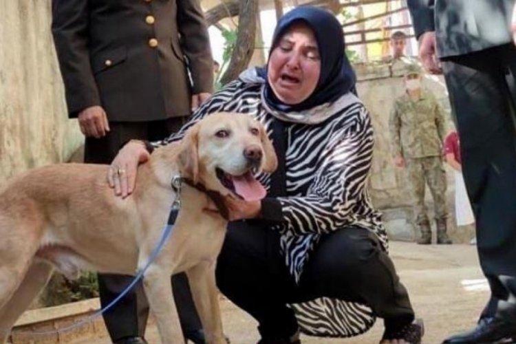 Şehit onbaşı Ahmet Akdal'ın köpeği ailesine verildi