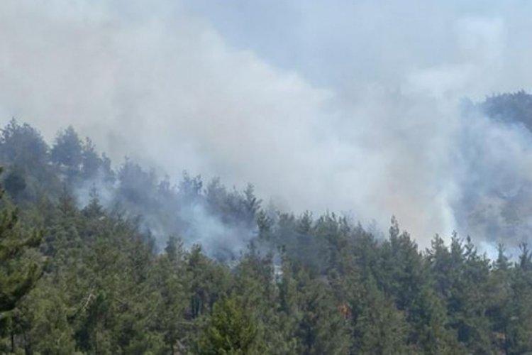 Kahramanmaraş'ta orman yangını paniği