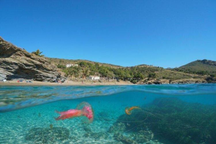 Yunanistan'da denizanası istilası