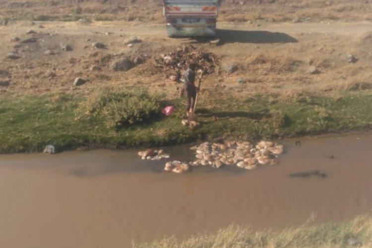 Mide bulandıran görüntü: Kurban atıklarını suya attı